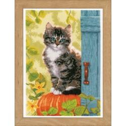 Cat & Pumpkin - Counted...