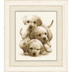 Labrador Puppies: Counted...